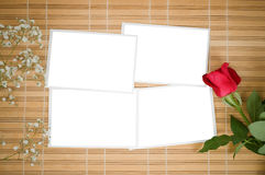 Blank photo prints and rose Royalty Free Stock Photo