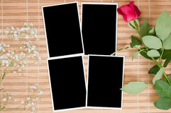 Blank photo prints and rose stock photo