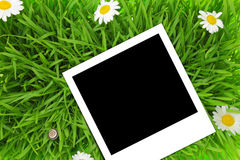 Blank photograph template on green grass Stock Images