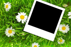 Blank photograph template on green grass Stock Photo