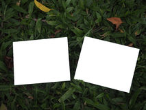 Blank photos and grass background. Blank photos for give memories stock photography