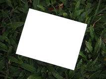 Blank photos and green background. Blank photos for give memories royalty free stock photography
