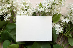 Blank piece of paper Royalty Free Stock Image