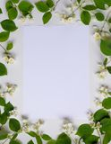 Blank piece of paper in frame of white flowers and green leaves on white background, top view. Spring card with copy. Blank piece of paper in a frame of white stock images