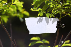 Blank piece of paper in nature. Torn white empty cardboard hanged on tree branch with green leafs ideal for writing messages Royalty Free Stock Photo