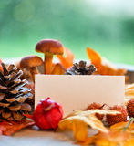 Blank Place Card Amongst Autumn Foliage Royalty Free Stock Images