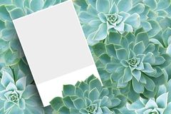 Blank postcard or brochure Royalty Free Stock Photography