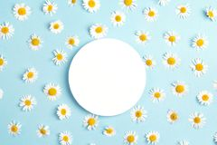 Blank round frame with chamomile flowers on blue background. Cop Royalty Free Stock Images