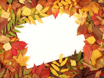 Blank sheet of paper on a autumn frame Stock Photography
