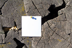 Blank sheet of paper on the old cracked stump Stock Images