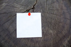 Blank sheet of paper on the old stump Stock Images