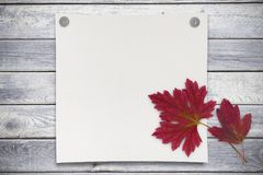 Blank sheet of paper and red leaves on wood background Stock Photography