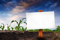 Blank sign in corn agricultural field Stock Image