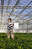 Blank sign in a glasshouse Stock Photography