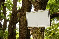 Blank sign indicating hanging on the tree trunk Stock Photos