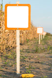 Blank sign next to corn maize field, agricultural concept Royalty Free Stock Image