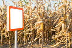 Blank sign next to corn maize field, agricultural concept Stock Images