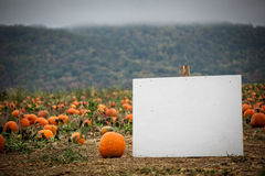 Blank sign in a pumpkin patch Stock Photo