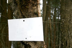 Blank sign on tree. Design element: put your message on this sign, nailed to a tree in the forest. (For a traditional look, use a bold sans serif in black type Stock Photography