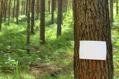 Blank sign on a tree Stock Images