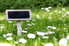 Blank signboard in the meadow. And flowers stock image