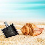 Blank slate with a seashell on a sunny beach Stock Images