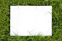 Blank space on green. Stock Photo