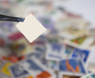 Blank stamp. Closeup of a blank stamp over a pile of stamps Stock Image