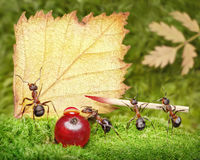 Blank, team of ants writing postcard, teamwork royalty free stock image