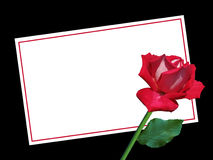 Blank Valentine's Day card with Red Rose Royalty Free Stock Images