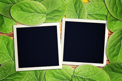 Blank vintage instant photo frames Royalty Free Stock Photos