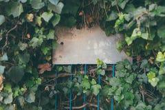 Blank vintage street sign in a green leaf. Hedge stock images