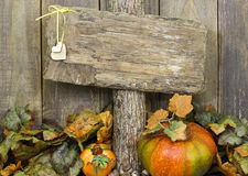 Blank weathered wood sign with autumn border of leaves and pumpkins Royalty Free Stock Image