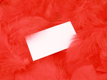 Blank white card on a feather background Stock Image