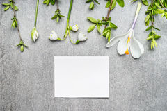 Blank white card with snowdrop, crocuses flowers and spring twigs, top view. Springtime Stock Photos