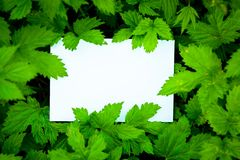 Blank white card surrounded by leaves Royalty Free Stock Photos