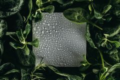 Blank white card with water drops and fresh. Green leaves stock photography
