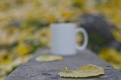 A blank white coffee cup and the leaf royalty free stock photos
