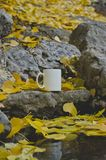 A Blank white coffee mug on the riverbank rocks royalty free stock images