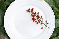 Blank White Dish with Red Holly royalty free stock photo