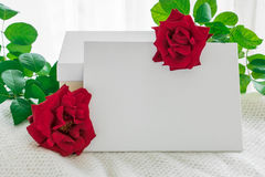 Blank white frame with gift box and red rose flowers on knitted Stock Image