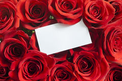 Blank white gift card on a red rose Valentine Royalty Free Stock Photography
