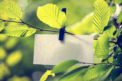 Blank white note paper hanging in green leaves Royalty Free Stock Images