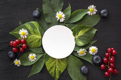 Blank white paper card with daisies, leaves, red currants and blueberries stock image