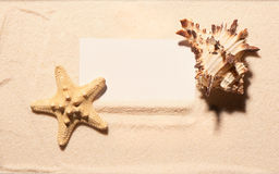 Blank white visit card with starfish and seashell on sand Stock Image