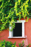 Blank window with tree on wall. Blank window with tree on orange wall royalty free stock photo