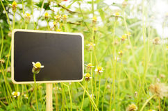 Blank wooden board signs on small flowers background with warm l Stock Photography
