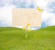 Blank wooden board on spring meadow. With flowers ang butterfly stock photo