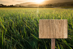 Blank wooden sign. On field of farm. Concept of rural, idyllic, tranquility etc Stock Photography