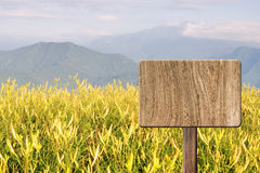 Blank wooden sign Stock Images